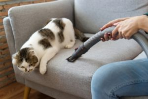 How do you keep your house clean with pets